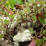Фото 4. Растительность хамар-Дабана